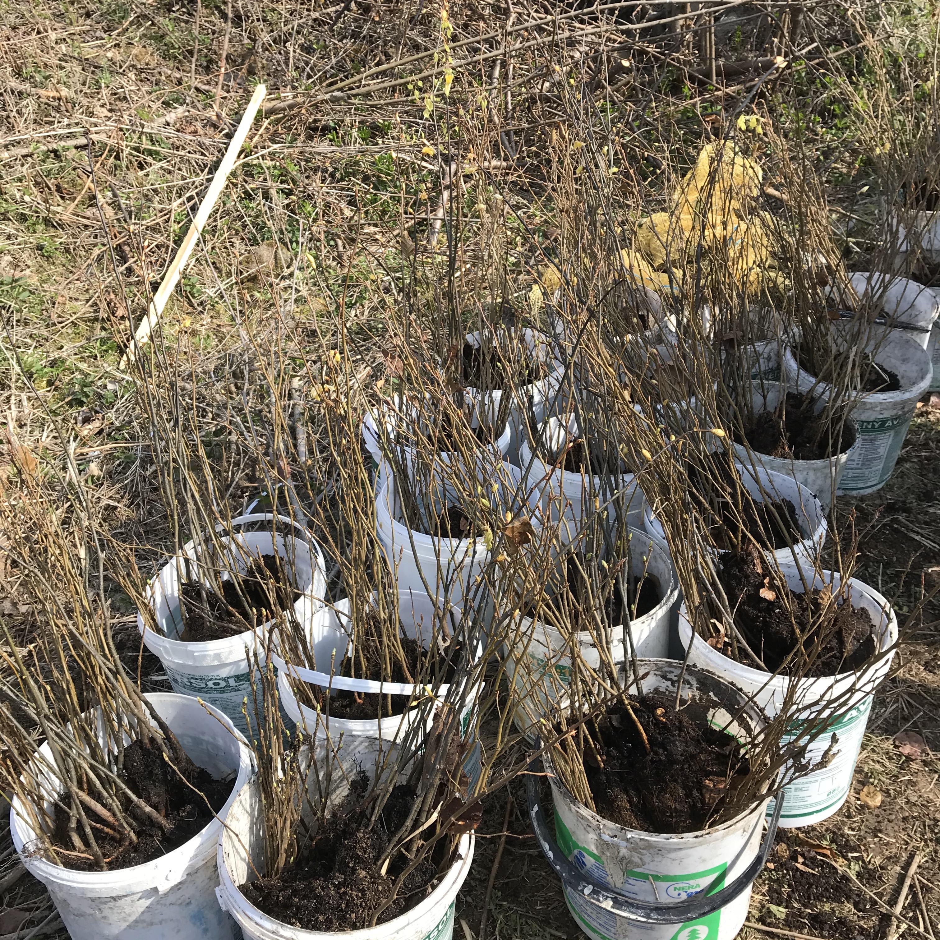 Zaměstnanci Ondrášovky vysadili vblízkosti Moravského  Berouna les odolný vůči suchu i kůrovci
